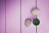 Flat lay stones and plant on the white background