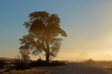 Sunrise with silhouetted tree and dust, Kalahari desert, South Africa.