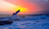 Couple jumping dolphins at sunset