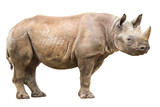 African white rhinoceros - 154542162
