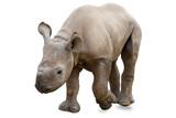 Baby rhinoceros on white - 154542557