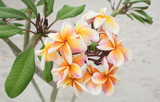 Soft focused picture of Bouquet yellow and orange colour Azalea flowers