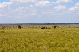 View of the Tsavo East savannah