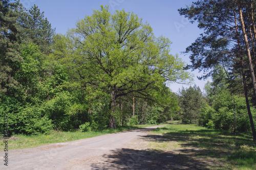 Foto op Canvas Weg in bos Leśna droga.