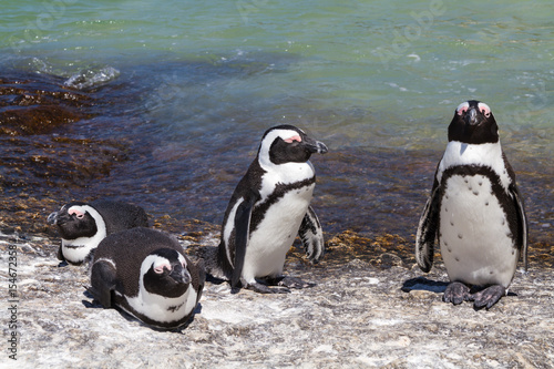 Plakát Jackass Penguins