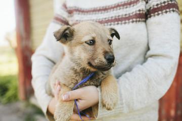 Puppies German shepherd