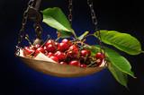 Prunus avium Anh đào Բալ Kirsuber Kers fruit 버찌 Czereśnie 樱 Ciliege Cereza Kirazgiller Вишня плод Třešně Guinda