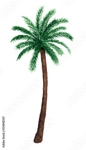 Palm tree in watercolor. - 154848307