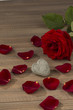 roses for valentine's day and mother's day - 154905120