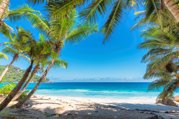 Palm trees on tropical beach.