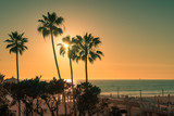 Palm trees on Manhattan Beach at sunset, Los Angeles. California.
