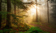 Golden rays of sunlight falling into a misty forest