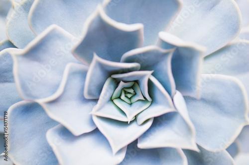 Succulent flower pattern closeup - 154971719