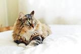 Szary kot leży na łóżku