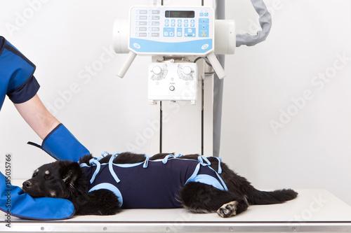 Fototapeta Vet X-ray, Veterinary care