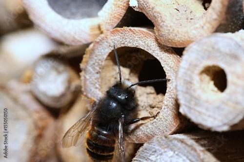 Wildbiene am Stock