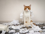 Funny cat made a mess, tore up paper - 155082578