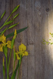 Yellow flowers of iris on a wooden background