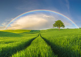 Rainbow over a green field in a spring evening - 155137740