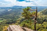 Widok na góry z punktu widokowego na skale koło samotnego drzewa
