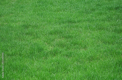 Fotobehang Groene real green grass background