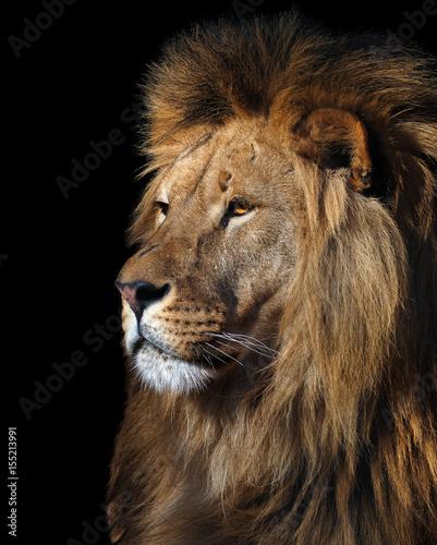 Fototapeta Lion's profile portrait isolated at black