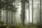 Lovely foggy forest tree landscape. - 155298787