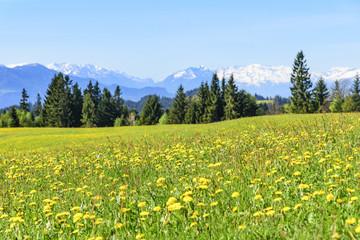 Frühling in den Bergen Vorarlbergs