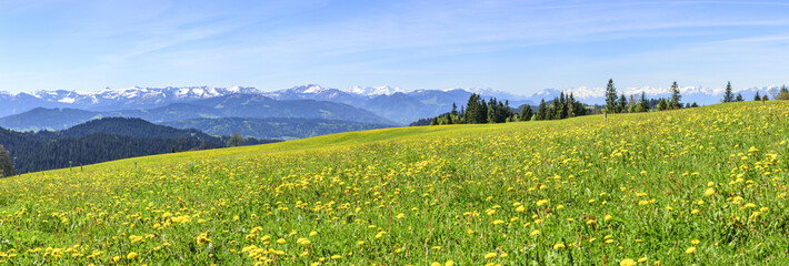 blühende Almwiese in den Alpen