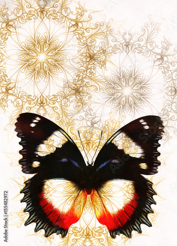 Color Butterfly with ornament and white background.
