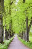 Baumallee mit Fußweg im Frühling - 155560195