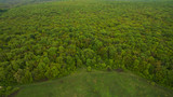 Beautiful landscape forest view from above