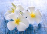 Frangipani flower on table