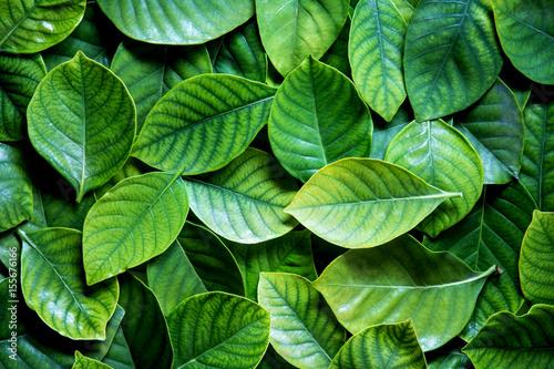 Świeży tropikalny zieleń opuszcza tło