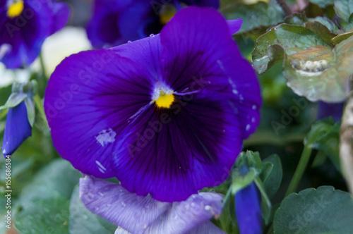 Purple flower - 155686584