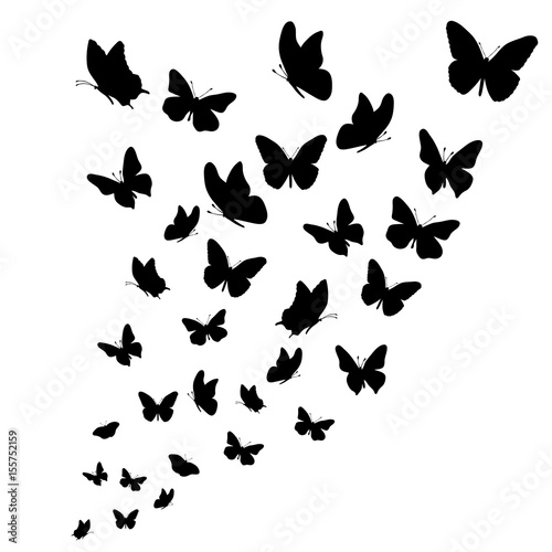 Fototapeta Vector silhouette of butterflies on white background.