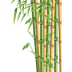 fresh bamboo leaves border, botanical zen forest, tropical spa decoration. vector illustration