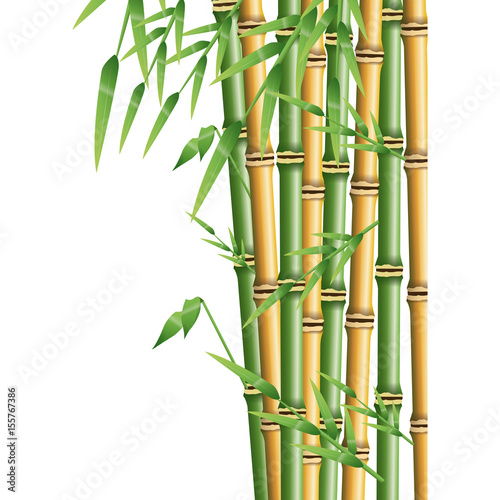 Fototapeta fresh bamboo leaves border, botanical zen forest, tropical spa decoration. vector illustration