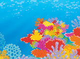 Colorful coral reef in a tropical sea