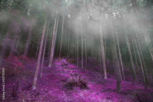 Fotobehang Betoverde Bos Mysterious foggy forest with magic road , gloomy dark magic forest landscape