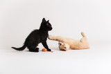 Kittens wrestle each other and play with a cat toy - 155893946