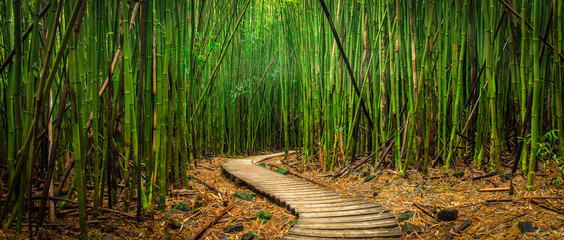 Bamboo Forest © db