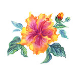 Yellow hibiscus, watercolor illustration on white background.