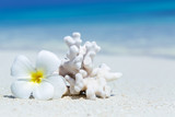 Plumeria flower and coral on perfect Maldives beach