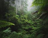 Bujny las deszczowy z poranną mgłą