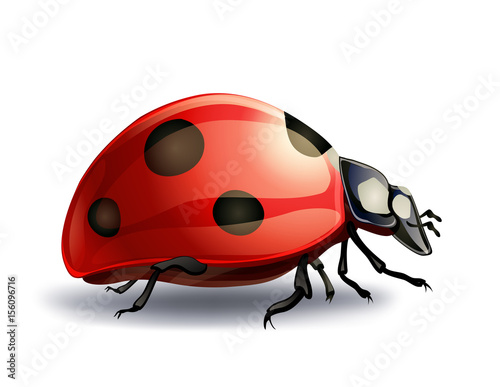 ladybug on white. vector illustration