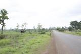 My cambodia