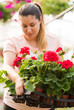 Pretty florists woman working with blooming flowers at a greenhouse