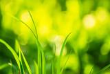 Green grass on a bri...