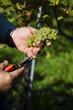 vintage in the vineyard - 156236914